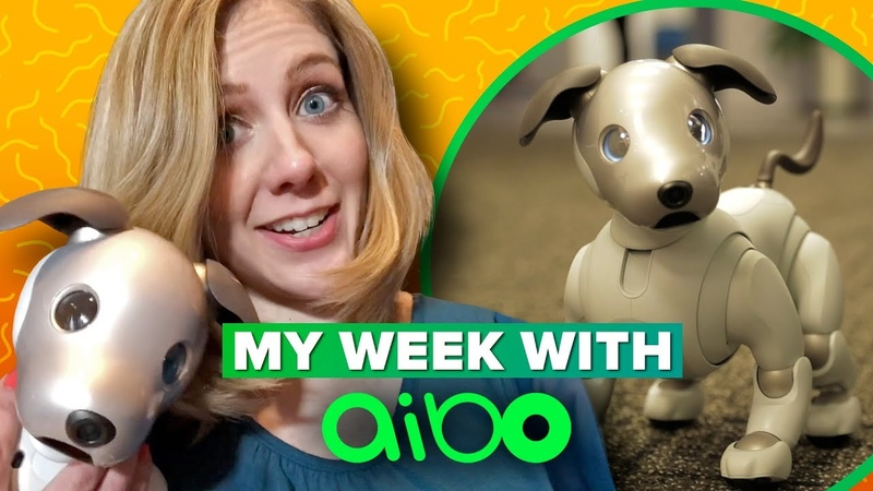Sony Aibo what its like to live with a robot dog