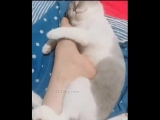 Sleepy cat hugging his humans foot - Dont leave me I love you