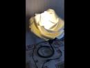 Роза светильник распустившийся бутон