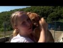 Перуанец увезет изРоссии бездомную собаку