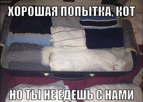 http://cs616016.vk.me/v616016842/191b3/9-wODBf3LWk.jpg