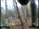 Activités ludiques 1 L'ourse Tolosa perchée au dessus du vide sur un tronc d'arbre couché
