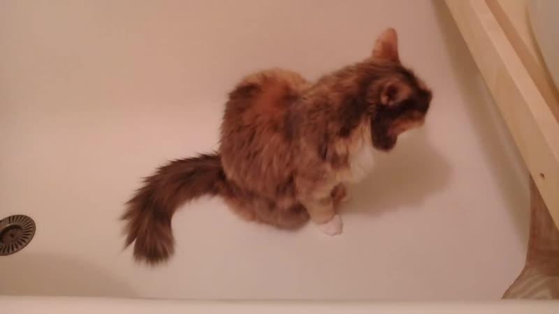 Мурча моется в ванне