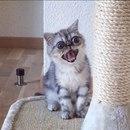 Кот-экзот по имени Гермет, в душе – драматический актёр…