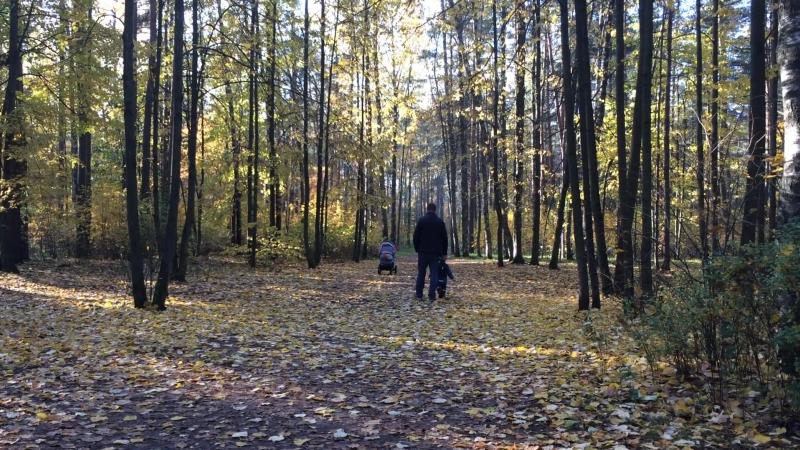 Золотая осень в Сосновке