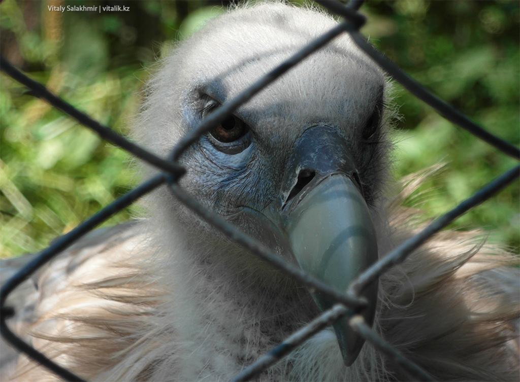 Хищная птица в зоопарке Алматы 2018