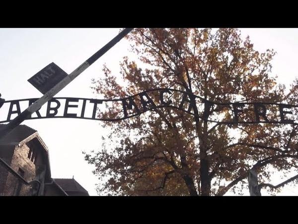 4 in 10 millennials don't know 6 million Jews were killed in Holocaust, survey shows