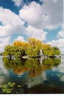 У 50-65-х роках ХХ ст. до Тернополя було завезено чимало екзотичних рідкісних дерев для висадження їх у парках міста.