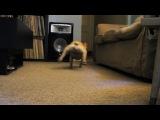 Пёс, смешно, прикол, спринтер, игра, лазер, до слёз, ахахах