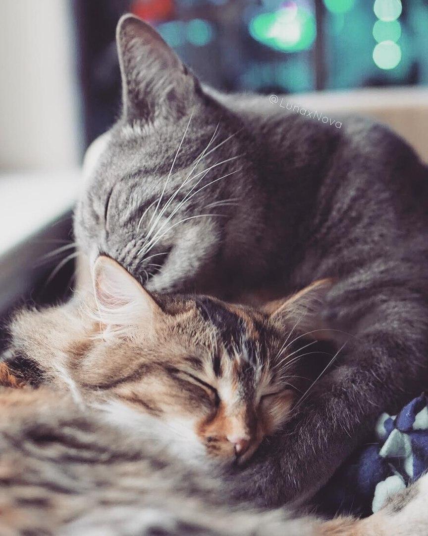 Картинки с котятами с любовью