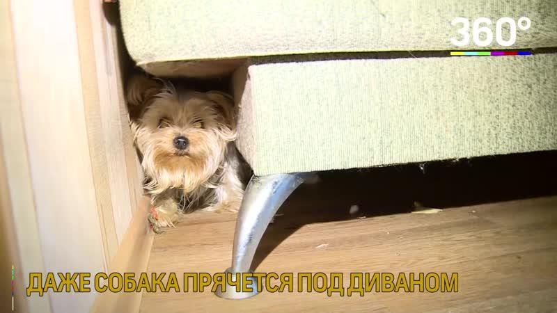 В городе Щёлково в доме опасно жить даже собакам