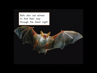 All about bats (А.Л.+Л.Р.)