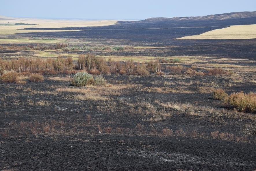 Последствия пожара в Буртинской степи