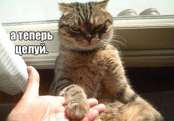 прощай тебя я: