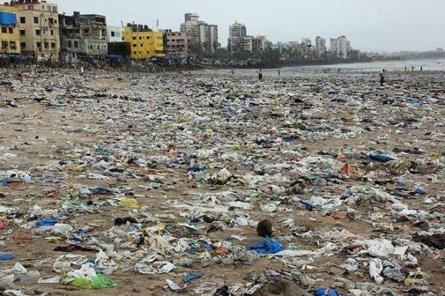 Добровольцы в Индии убpaли с пляжа 5 млн. кг. муcора, и туда вернулись черeпaшки