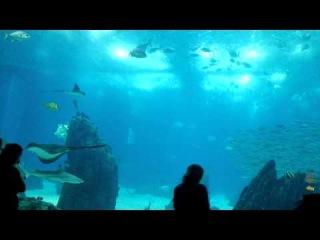 Тест очков с камерой Pivothead (океанариум Лиссабона)