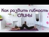 Гибкое тело. Формирование здорового позвоночника / Упражнения для гибкости спины
