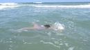 Little dolphin girl A under waves of Black Sea - Micuta A inoata pe sub valuri la mare