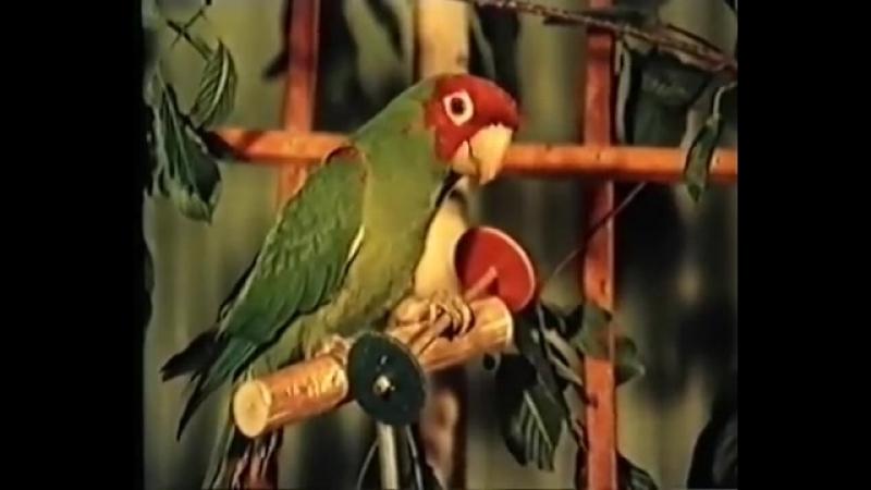 Птицы-пересмешники - учебный фильм