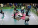 1-ый спортсмен это Максим Истомин мастер спорта по пауэрлифтингу в категории до 90 кг GOOD LIFT 170 кг.