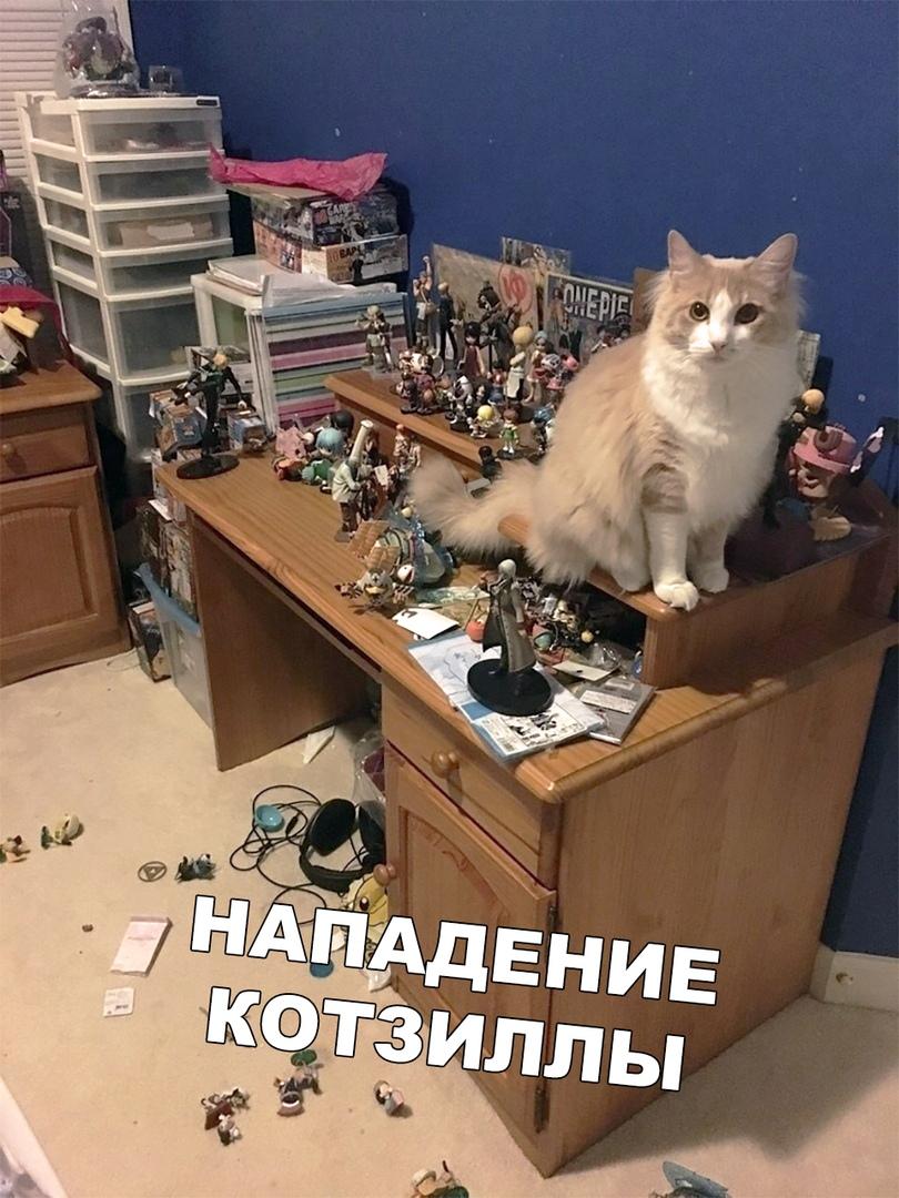 Я кот и сижу где хочу