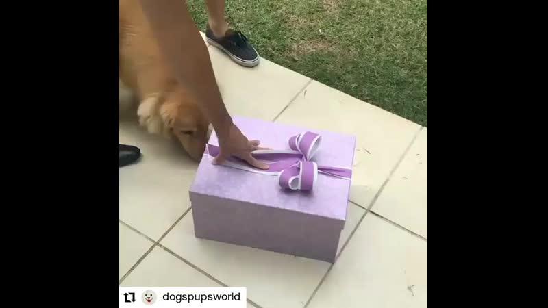 Подарите Мне Пожалуйста Собачку