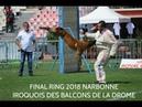 Iroquois des Balcons de la Drome - Final ring 2018 Narbonne
