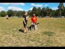 Битва собак в Загородном парке