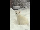 Зима пушистой белой кошкой