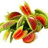 Хищные растения, Венерина мухоловка, Дионея