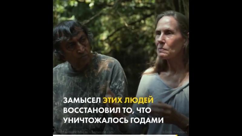 Семейная пара восстановила лес на площади 1 кв км