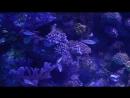 Турция Анталья аквариум 2018