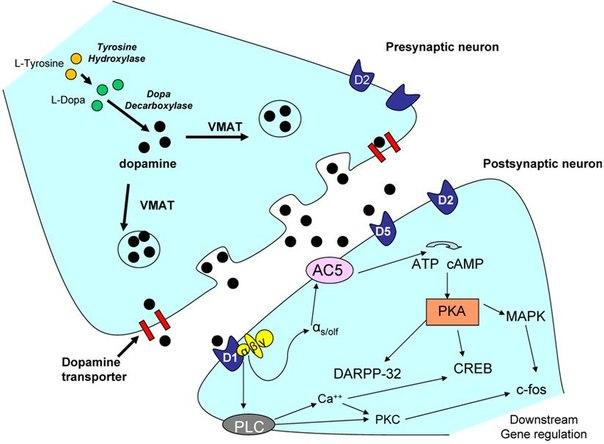 Ревматоидный артрит серопозитивный мкб