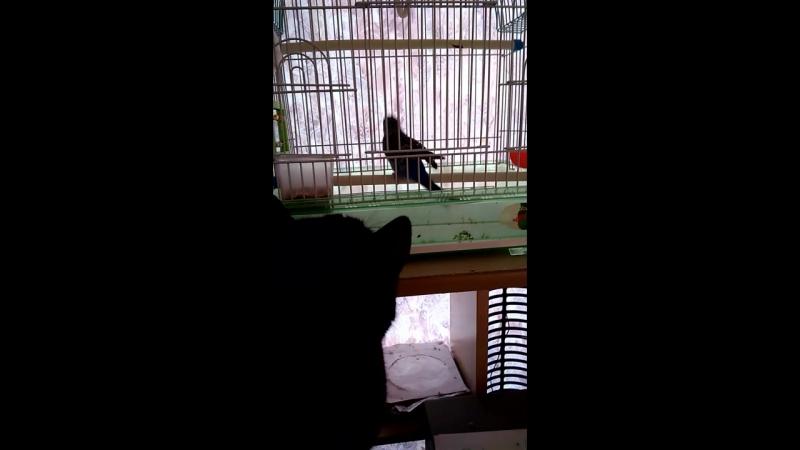Дормидонт познакомился с попугаем.