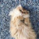Кот по имени Смузи