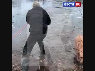 Cпасение провалившейся собаки попало на видео