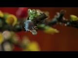 Travis Scott - 90210 ft. Kacy Hill official video_music_hip hop