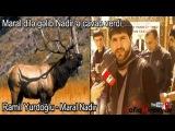 Ramil Yurdoglu Maral Nadir 2014