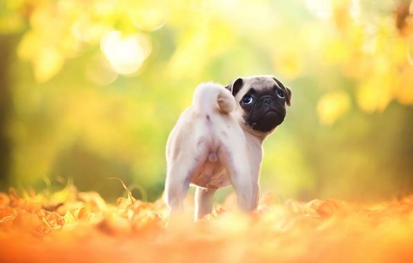 как красиво осень разбросала листья ветер шелестя осенний джаз игралот тебя навстречу новой жизния по этим листьям