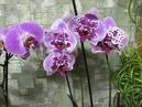 Как заставить орхидеи цвести 100%результат