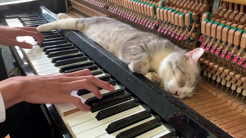 The best lullaby for cat (Meowssage)