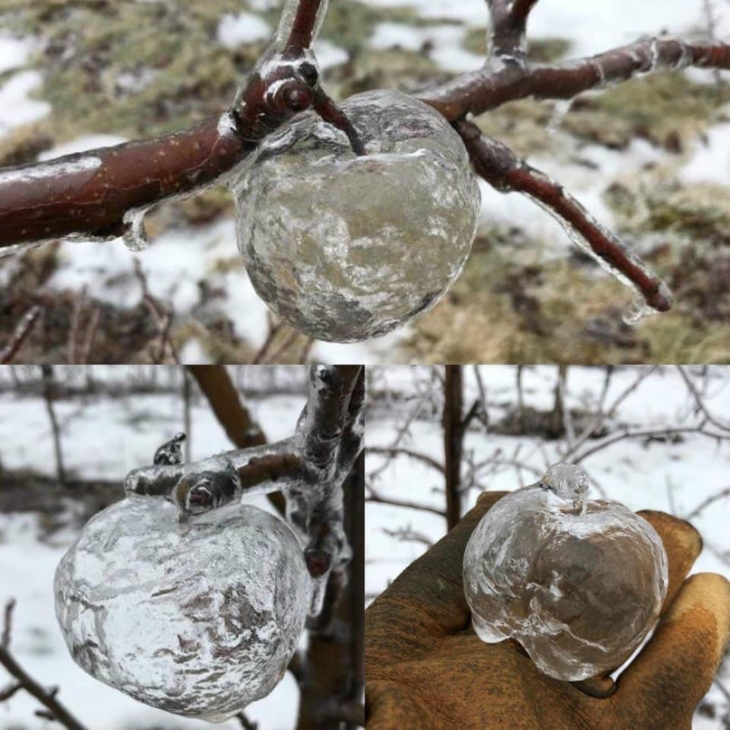 """Képtalálat a következőre: """"ghost apples ice"""""""