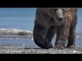 Тизер__Знакомьтесь, бурый медведь Миша, с Камчатки.__Я - медведь!#0__Природа для