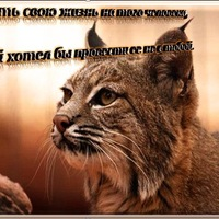 Ирина Симоненкова, 14 ноября 1989, Серпухов, id100319202