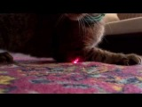 [FullHD] Кошка врезалась в камеру! СЕНСАЦИЯ!!!!