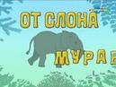 11 От слона до муравья. Эволюция. Строение рыб. Образовательное видео от Хрюши.