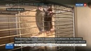 Новости на Россия 24 Под Ростовом задержаны контрабандисты перевозившие кенгуру и обезьян