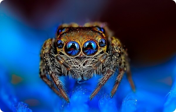 Кто-то не любит пауков, кто-то попросту их боится, но после просмотра этих удивительных фотографий вы, скорее всего, по-другому посмотрите на этих необычных и таинственных существ,... #zoopicture #Насекомые #Паук