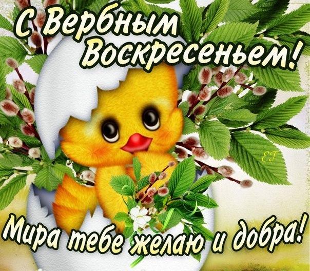 Фото №303353752 со страницы Ивана Петрова