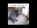Прикольный ролик про собак и кошек